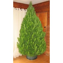 Harry's Fresh Christmas Trees In Store from 30Th November 2016 (not available online)